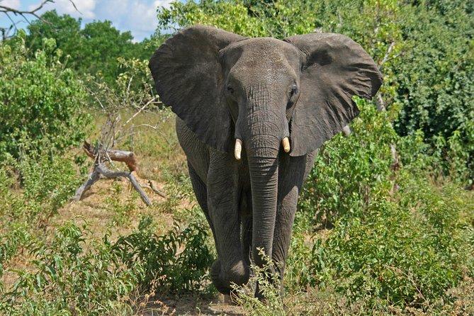 Excursión de 5 días a las Cataratas Victoria y al Parque Nacional de Chobe con traslado de ida y vuelta desde Johannesburgo, Johannesburgo, SUDAFRICA