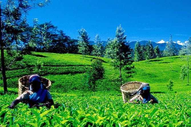Explore Nuwara Eliya and Kandy with a dedicated guide on this customized tour. You'll benefit from personalized attention and the ability to move at your own pace. Enjoy the scenery as you ride through the cool hill country of Nuwara Eliya; with your guide behind the wheel, you can just enjoy yourself. Explore the UNESCO-listed city of Kandy and stay overnight in an included hotel.<br>- Private tour for your party only<br>- Overnight accommodations with breakfast<br>- Dedicated guide provides customized commentary<br>- All private transportation provided