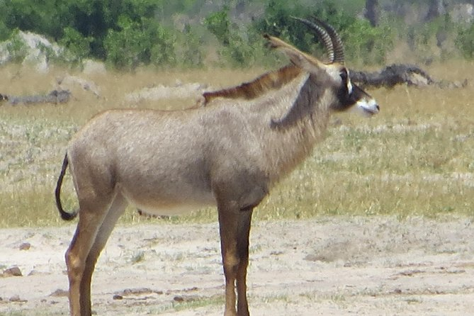 Hwange National Park & Victoria Falls 5 days Combo, Cataratas Victoria, Zimbábue
