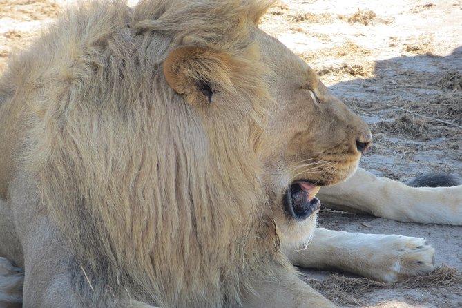 Hwange National Park & Victoria Falls 5 days Combo, Cataratas Victoria, ZIMBABUE