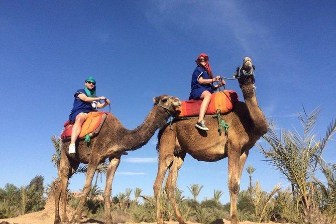 Jardim de Majorelle e Passeio de Camelo em Marraquexe, Marrakech, cidade de Marrocos, MARROCOS