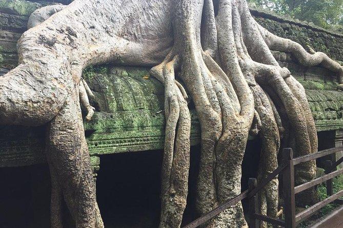 Excursión para grupos pequeños al amanecer de Angkor Wat desde Siem Reap, Siem Reap, CAMBOYA