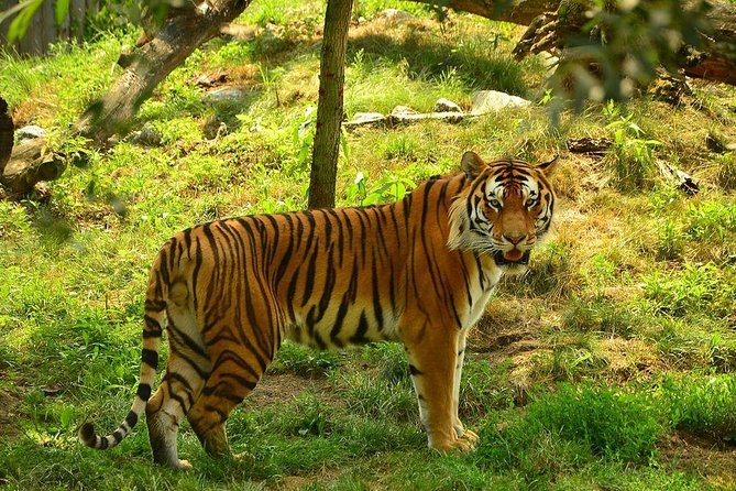"""Just half an hours away from Khajuraho & located in the dense jungles is the hidden paradise of Tigers known as panna. also noteworthy are the majestic waterfall of """"Raneh"""" offering imposing view of the the surrounding flaura and fauna. Be amazed to experience this wonder located near to the temple city of Khajuraho."""