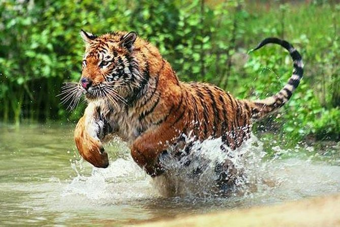 3-Day Ranthambore Wildlife Safari Tour from Delhi is a unique tour specially designed for the tourists who love to do a safari, If you've always dreamed wildlife tour and holidays in wildlife destination, Plan your perfect trip to Ranthambore for relax, wildlife safari experience and adventure. Ranthambore is a famous wildlife center in Rajasthan. This 3-day Ranthambore wildlife safari tour is specially designed for the same and it's a private tour with Airport Or Hotel pick up and drop off.  2 nights accommodation is included in the tour package