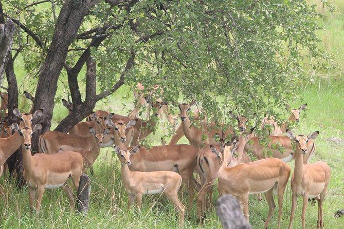 The Mosi oa Tunya National Park Game Drive, Livingstone, ZIMBABUE