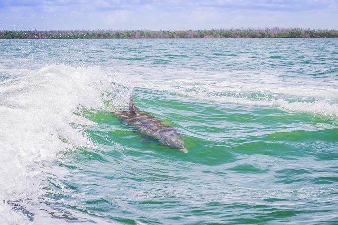 Recorrido de observación de delfines por Marco Island, Naples, FL, ESTADOS UNIDOS