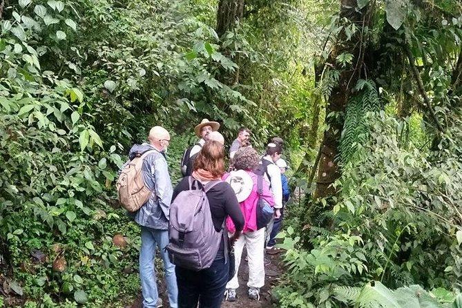 MÁS FOTOS, Excursión de día completo de observación de aves: Refugio La Paz y santuario de colibrís desde Quito