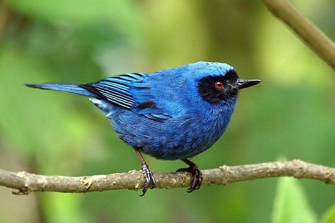 Excursión de día completo de observación de aves: Refugio La Paz y santuario de colibrís desde Quito, Quito, ECUADOR