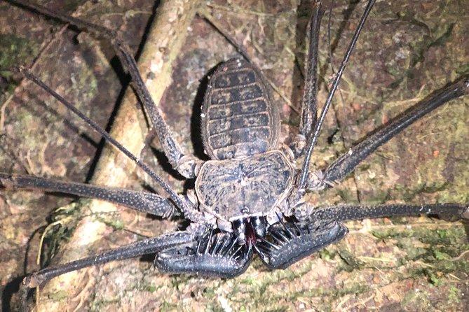 Experiencia con noche de investigación en la selva con Manuel Antonio, Quepos, COSTA RICA