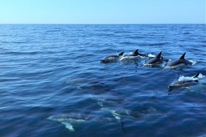 Excursão de barco somente para observação de golfinhos em Sesimbra, Distrito de Setúbal, PORTUGAL