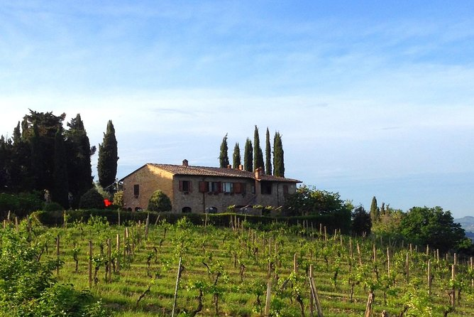 Wine & Evo oil tasting with Saffron Meal, San Gimignano, ITALY
