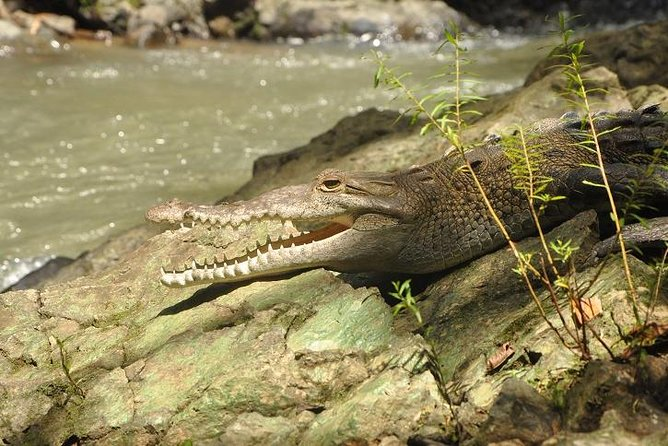 This is a unique way to get to see animals in this special place without moving much. Birds, crocodiles, snakes, mammals, and many more.