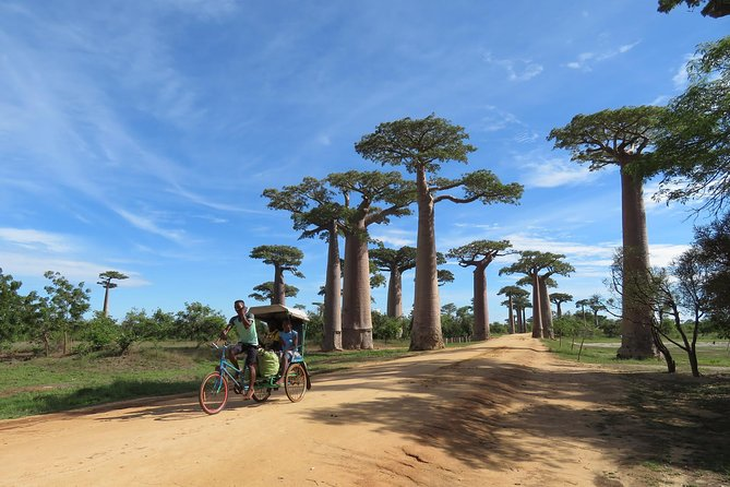 "Experience how this 5 day, 4 night tour emphasizes and displays some of the most famous and sacred places in Madagascar, including the Avenue Du Baobab (""Baobab Avenue""), and on the western coastal zone of the island.  You will have an opportunity to experience and see the most unique and bizarre landscape in the country on this small-group tour of emblematic Africa. The tour includes driving among incredible scenery with ample opportunity to get out and enjoy the hot spots.  Hotel pickup from Tana or airport pick up and drop off from TNR is included in the tour."