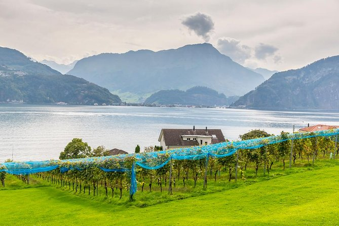 Small Group Wine Tasting by Lake Lucerne in a Traditional Winery, Lucerna, SUIZA
