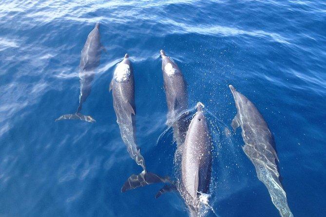 MÁS FOTOS, Dolphin and Snorkeling trip with CostaRican Companys
