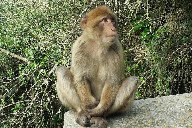 Private half day tour in Gibraltar visiting its Nature Reserve: Pillars of Hercules, St. Michael's cave, the monkeys -Barbary macaques&the Great Siege Tunnels.