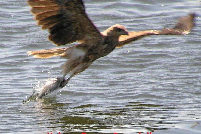 Kalgan Queen Scenic Cruises a four hour sheltered water wildlife tour daily fun., Albany, Austrália