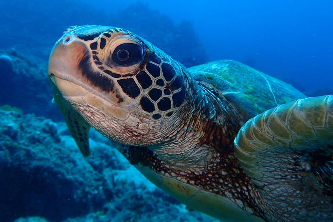 Continue your education with the Advanced Open Water Diver course - 2 days, Ko Lipe, TAILANDIA