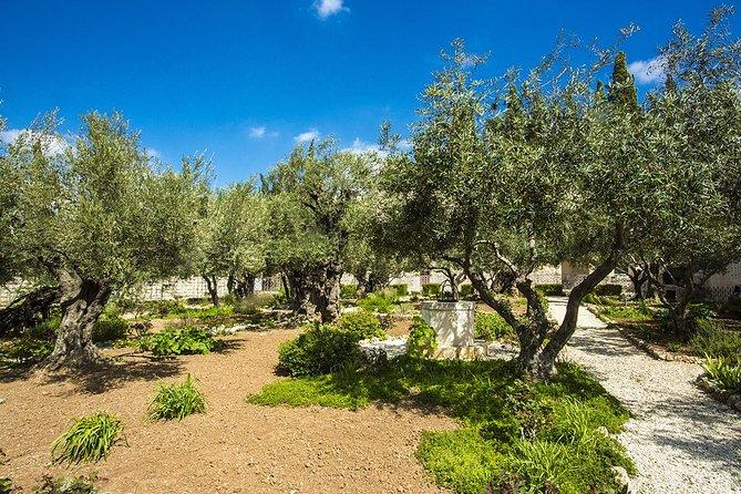 Jerusalén: Vista al Monte de los Olivos, Jerusalen, ISRAEL