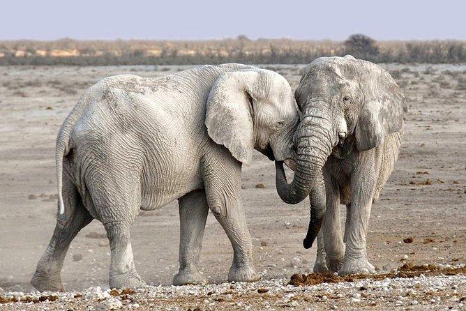 Safari con acampada de 2 días y 1 noche en Tarangire y cráter de Ngorongoro, ,