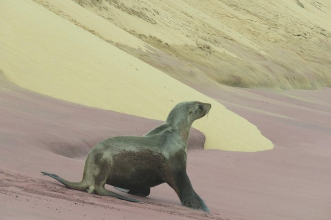 Sandwich Harbour Tour - Pelgrim Tours, Walvis Bay, NAMIBIA