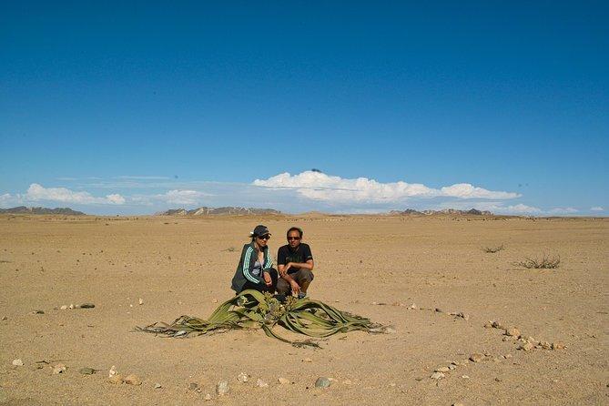 Pelgrim Tours - Moon Landscape & Welwitschia Mirabilis Tour, Walvis Bay, NAMIBIA
