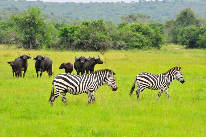 It is a one day tour that fulfills your safari dreams in many ways possible, a tour that is fit for those that would like a last minute tour of the country. The variety of wildlife like the Impala, Zebras, and lots of birds like the Pied Kingfisher, Pygmy Kingfisher, among others.