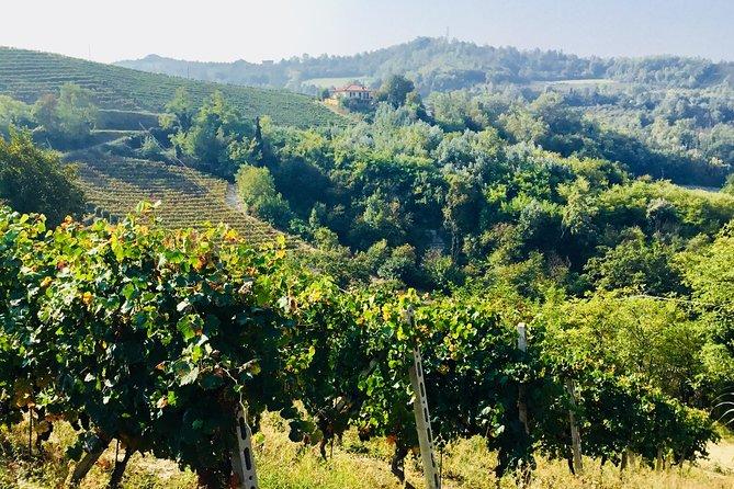 Truffle hunt and Barolo wine tasting, Langhe-Roero y Monferrato, ITALIA