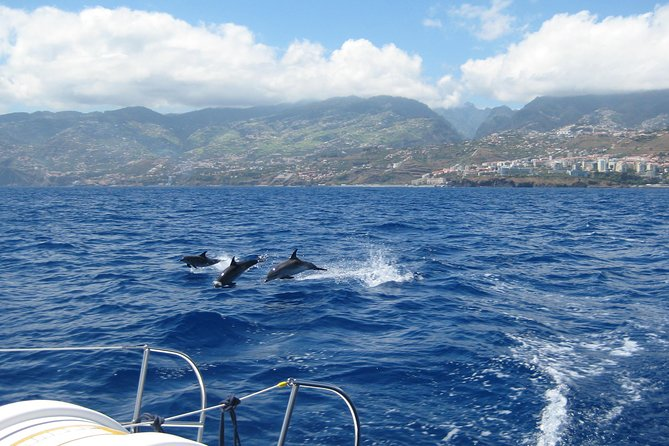 Seaborn catamaran dolphin and whale watching, ,