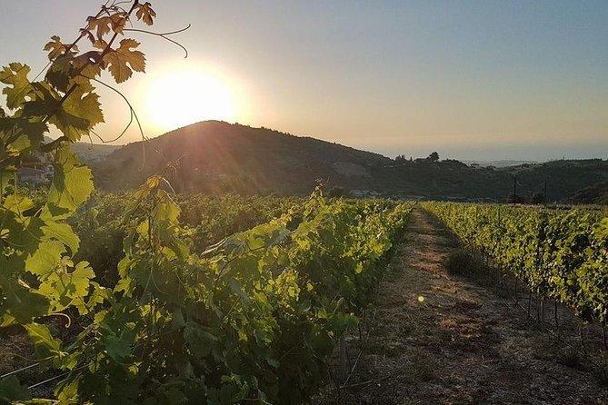 MÁS FOTOS, Vineyard & Wine Tasting Tour