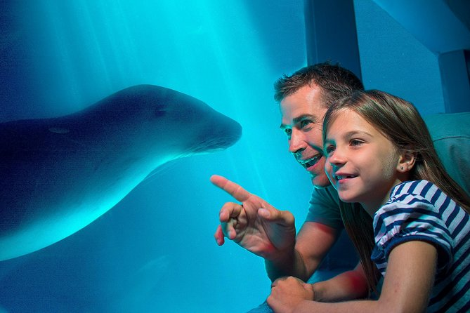 Please PRE-BOOK a time slot to guarantee entry.<br><br>Book your ticket to the multi-award-winning SEA LIFE Sunshine Coast, one of the most popular attractions on the Sunshine Coast. Discover the aquarium's 11 exhibit zones at your leisure, from sharks and seals to rays, turtles, tropical fish and more. Watch one of several daily interpretive presentations, including feeding time at Seal Island and exploring the corals of the Great Barrier Reef.