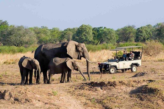 Zambezi National Park AM or PM Game Drive, Cataratas Victoria, Zimbábue