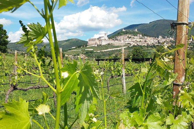 Pic nic nel Vigneto di Assisi, Assisi, ITALIA