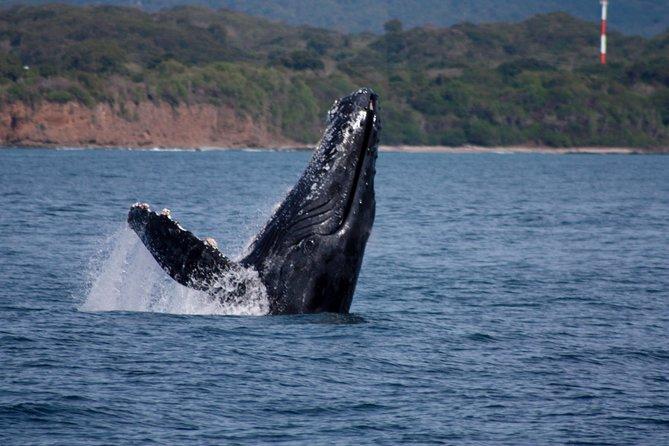 Crucero de avistamiento de ballenas en Puerto Vallarta, Puerto Vallarta, MEXICO