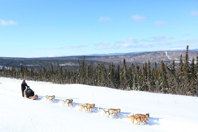 1-hour Winter Dog Sledding in Fairbanks, Fairbanks, AK, ESTADOS UNIDOS
