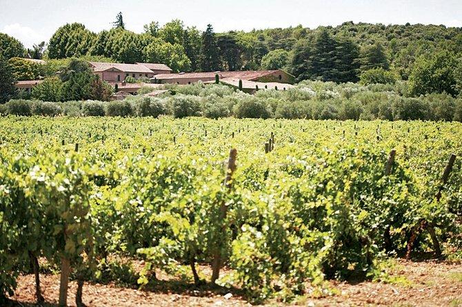 provence wine tasting, Niza, FRANCIA