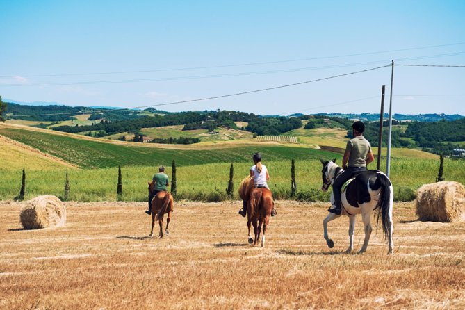 There's simply nothing like horseback riding at Agriturismo Diacceroni. The surrounding countryside is wild and vast, allowing you to fulfill your wildest galloping-into-the-sunset style dreams. Canter along the river or wade right through it. Gallop among the rolling hills or walk through vineyards and blooming sunflowers during summer. That's the beauty of nature at Diacceroni: there are no limits!
