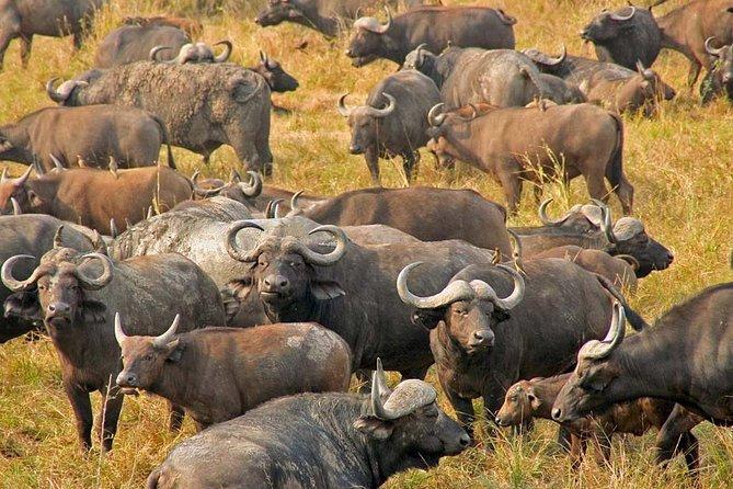 2 Days guided tour to Mikumi National Park from Dar Es salaam, Dar es Salaam, Tanzânia