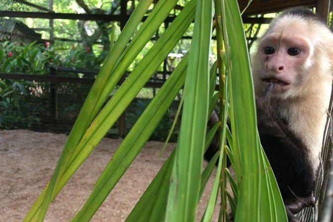 Zipline, Optional Monkeys/Sloths/Macaws Visit & West Bay Beach Resort: Roatan,HN, Roatan, HONDURAS