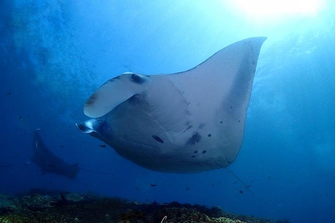 The highlight of scuba diving in Bali and the place to go for Beginner and Advanced Open Water divers for seeing the Mola Mola and the Manta Rays. Generally a total number three dives are recommended in Nusa Penida.