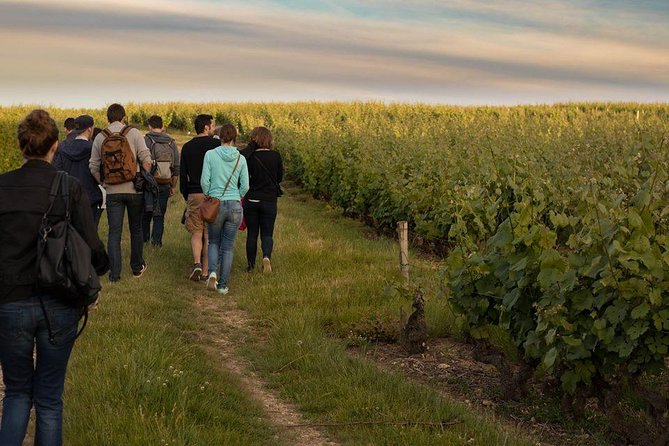 Tour of a Vineyard, Winery & Cellar with Wine Tasting in Vouvray, Loire Valley, Loire Valley, FRANCIA