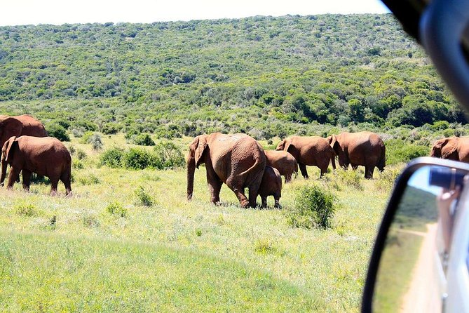 5-Day Garden Route with Addo National Park Small Group Tour from Cape Town, Cape Town, South Africa