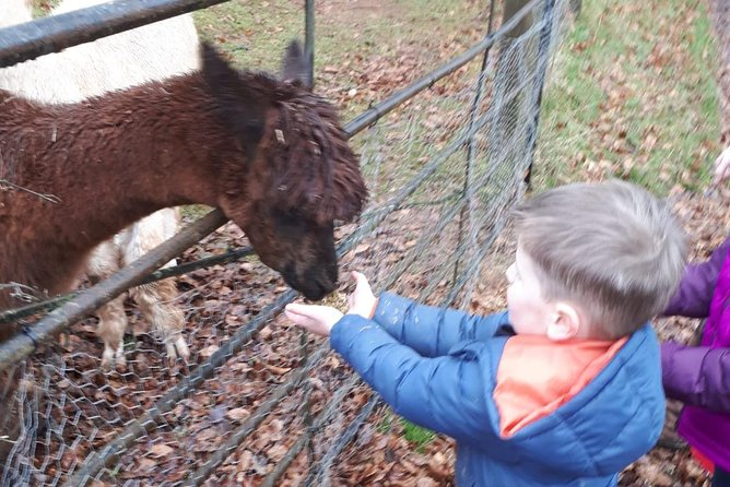 we are a family run small farm which offers alpaca walking and other animal feeding opportunities. Great for all ages