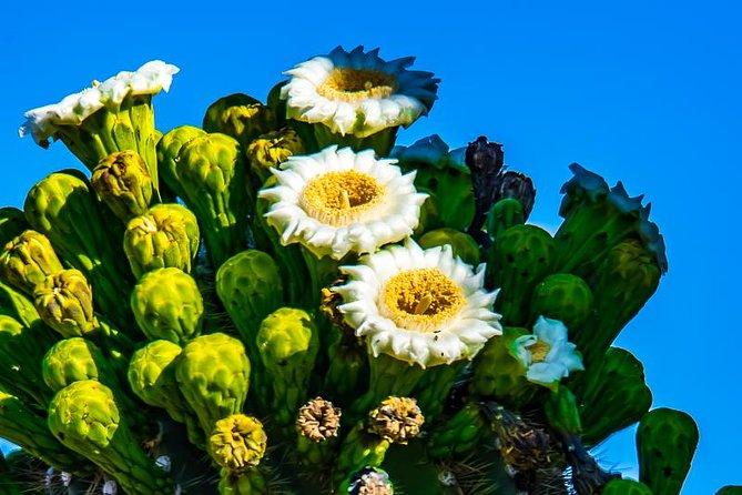4-Hour Sonoran Desert Morning Photography Workshop, ,