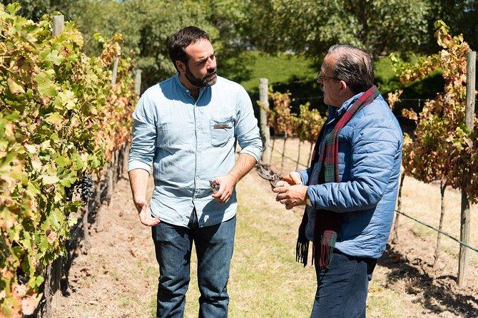 Vineyard & Peña de Bernal from Mexico City in a day, Ciudad de Mexico, Mexico