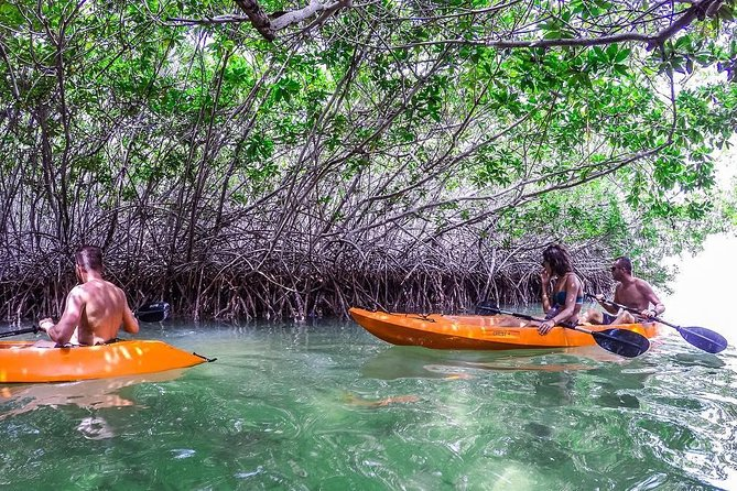 Our mangrove glass bottom kayak & snorkel tour begins at the lovely beach from Lac Cai. The Bonaire Mangrove reserve is located in Lac Bay National Park. Visitors can only enter the mangroves in the company of an experienced nature guide. Your stable, glass bottom sit-on-top kayak is equipped with a comfortable backrest seat, a waterproof bag for your personal belongings and, of course, paddles. Off you go, into the calm waters.<br><br>The glass bottom kayak provides an ideal mode of transport in this beautiful and tranquil environment, as you manoeuvre with ease through the mangrove shallows and tunnels.<br><br>Gliding by four different species of mangrove trees in crystal-clear waters, paddling past bird habitats and fish spawning areas, you'll learn of the relationship between the plants and the animals. The snorkel location offers a great variety of marine life and is considered by many a must-do while visiting Bonaire!