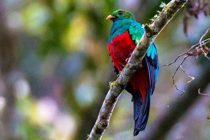 Hummingbird Expedition - PRIVATE PHOTO TOUR, all included, Quito, Equador