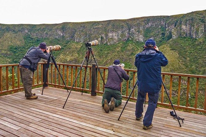 Antisana Volcano Birding & Natural History Condor Tour PRIVATE, all included, Quito, ECUADOR