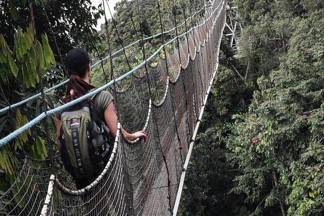 Safari highlights <br> • Ethnographic museum <br> • Chimpanzee trekking <br> • Canopy Walk in Nyungwe forest