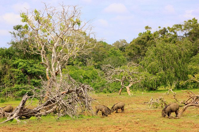 Private Full Day Leopard Safari with Picnic Lunch at Yala National Park, ,